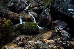 Water (MILESI FEDERICO) Tags: federicomilesi italia nikond7100 iamnikon valdisusa cesanatorinese nat quadronaturale wild water acqua visitpiedmont