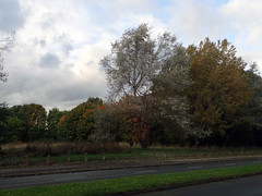 2016_10_170002 (Gwydion M. Williams) Tags: coventry britain greatbritain uk england warwickshire westmidlands autumn