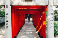 DSC_4554 (Excessive photons) Tags: japan fukuoka trip travel lifestyle beauty aesthetic mall aeon lighting night cityscape neon nikku desu garden shrine temple