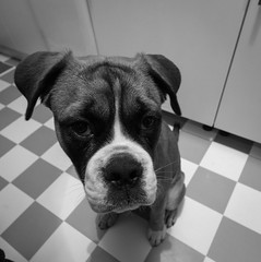 Buddy @ 10mm III (Lens a Lot) Tags: paris | 2016 canon efs 1018mm f4556 is stm ultra wide angle dog pet black white noir et blanc monochrome