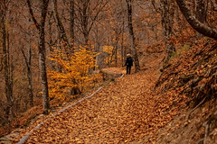 Autumn leaves (s_gulfidan) Tags: autumn leaves trees forest path saariysqualitypictures 400faves