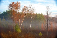 Michigan 8778 (Petr Bednarik) Tags: autumn birch colorful fall fog forest grass landscape larch michigan morning nature orange pine scenic sunrise upperpeninsula usa