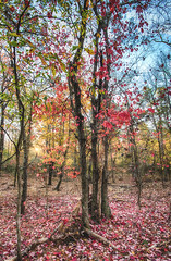 Going Dormant (jazziam) Tags: robber cave oklahoma wilburton hdr fall colors