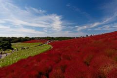 Red line (t.kunikuni) Tags: jp       japan ibarakiken ibaraki hitachinaka hitachinakashi hitachiseasidepark   summercypress  red