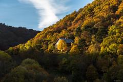 Colours (jerseyno12002) Tags: herbst laubbume kahlenberg leopoldsberg vienna wien wald wlder indiansummer lautunno