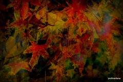 2016-11-028 what's left is just color (profmarilena) Tags: artwork art collage autumn autumncolors leaves mapleleaves fantasy