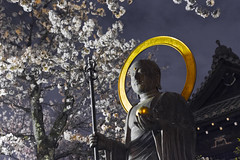 "Japan-1-0041- kyoto - bouddha (david ""Djannis"") Tags:  japan japon kyoto  night nuit  higashiyama extrieur cerisier bouddha buddha"