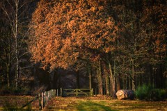 Let's meet.. (ParadoX_Design) Tags: trees rock bolder stone bug big large forest nature autum november track road dirt field fence entrance magical magic scene landscape moors hilversum netherlands gooi nederland heide heathland