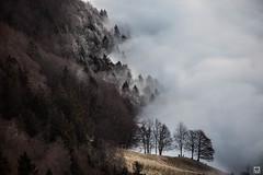 yin and yang (yves_matiegka) Tags: forest jura switzerland schweiz fog mist mountains getoutside passwang vogelberg baselland solothurn ice frost winter landscape