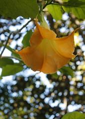 Un fiore con la testa all'ingiù (dona(bluesea)) Tags: fiore flower ortobotanico palermo sicilia italia