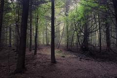 The Hiding Place (Netsrak) Tags: rheinbach nordrheinwestfalen deutschland de wald forst forest woods mist fog nebel nature natur outdoor