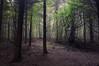 The Hiding Place (Netsrak (on/off)) Tags: rheinbach nordrheinwestfalen deutschland de wald forst forest woods mist fog nebel nature natur outdoor