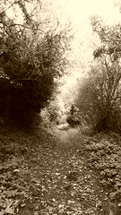 Railway cutting north of Burniston crossing (Scarborough - Whitby  old railway) (dave_attrill) Tags: scarborough whitby disused line trackbed route cinder path dr beeching report 1965 ner north eastern railway october 2016 burniston