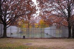 L1000458_p (thebiblioholic) Tags: setonpark riverdale bronx tenniscourt fallcolors