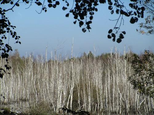 See im Moorgebiet, unbeabsichtigte Folge der Renaturierung , NGID1173389745