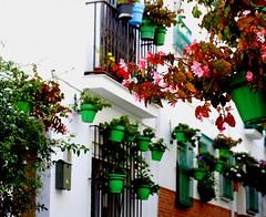 Begonias rosas (camus agp) Tags: balcones ventanas pueblos flores estepona begonias macetas espaa calles