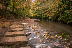 Bedlington Country Park (Craig Richardson) Tags: 2470mm autumn bedlingtoncountrypark d750 humfordmill riverbank riverblyth steppingstones trees water