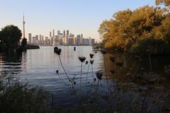 Toronto Skyline (katharinabeniers) Tags: toronto skyline lakeontario ontario canada sunset ferry lake outdoors summer reflection canon tamron wideangle