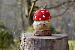Fliegenpilz (*Darenae) Tags: pilz fliegenpilz flyagaric mushroom kunst art baumstumpf stump rot red nature natur colour farben colourful bunt farbe