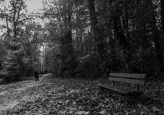 A walk in the wood (CREE PING) Tags: 44 orvault chteaudelatour fort canon canon7d creeping city chemin chteau nature ngc nantes naoned newlife bretagne breizh bzh 1740mml monochrome banc promenade france french feuilles floral automne