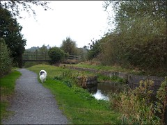 Newport Shropshire canal 111011old photos Liz Callan (2) (LIZ CALLAN) Tags: newport shropshire canal dog bordercollie grass water swans cygnets bridges paths waterlilies lizcallan lizcallanphotograph lizcallanphotography trees outside landscape