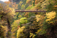 23Mitarai Valley (anglo10) Tags:    bridge japan    valley  autumnleaves