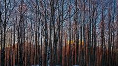Profili (stendol [L.B.W.L.]) Tags: grafismo profili profile bosco wood rami inverno autunno neve montagne hidden nascoste