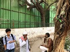Tea Tree (Mayank Austen Soofi) Tags: delhi walla tree tea chai
