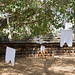 Anuradhapura - Sri Maya Bodhi or Mayura Parivena