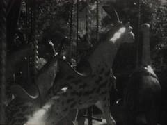 Jardin des Plantes Super 8mm (Dominik Lange) Tags: nature parkcity stereo blackandwhite super8mm super8 filmcamera freetime