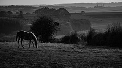 2016 10 29 - Sunset-14 (OliGlo1979) Tags: fuji luxembourg xt2 xf50140 landscape sunset horse silhouette