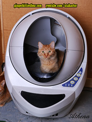 Win A FREE Litter-Robot! (youtube.com/utahactor) Tags: litter robot box win free contest holiday christmas giveaway cat gato gata