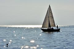 Sur un lac d'argent (Diegojack) Tags: lausanne ouchy embouchure vuachre vertou bateau voiliers voiles navigation lman lumire