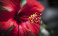 Nature details (Patriziovoltage) Tags: plant flower nature details natura dettagli fiore piante