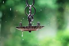 Rainy season (tanakawho) Tags: green rain metal waterdrop dof bokeh stopmotion rainyseason tanakawho weekendshowcase