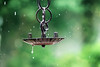 Rainy season (tanakawho) Tags: green rain metal waterdrop dof bokeh stopmotion rainyseason tanakawho weekendshowcase