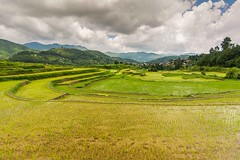 Mountains and Rice fields of Nepal
