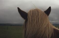 Iceland (a rentsova) Tags: horses horse film landscape island iceland pentaxk1000 fujifilm icelandic astia astia100f