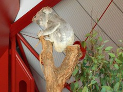 Australia [əˈstreɪljə, ɒ-, -iə/] (EDWW day_dae (esteemedhelga)™) Tags: coral jack zoo shark stingray peacock clam lizard koala kanagroo croc seafood oysters wax operahouse reef snakes waxfigure tasmaniandevil jumboshrimp prodcuce