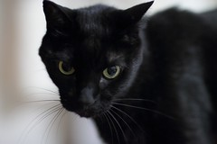 Lio (candyz0416) Tags: cats lio canonef85mmf12liiusm cats2013