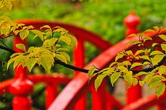 japanse tuin de brug en de tak (Don Pedro de Carrion de los Condes !) Tags: contrast groen denhaag tuin brug rood donpedro clingendael landgoed japansetuin clingendaal landgoedclingendael bruggetjes stylejaponnais tuinjapans