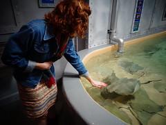 Downtown Aquarium, Houston, TX (Becky Haltermon Robinson) Tags: pet pool aquarium texas stingray tx touch houston petting handson downtownaquarium