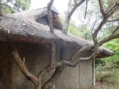 DSC00482 (m_kabza) Tags: southafrica safari timbavati tandatula