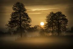 Orange Mist (Andrej Trnkoczy) Tags: color misty sunrise nikon warm colourful dslr humid d800 colourfulimage orangemist fullofcolour