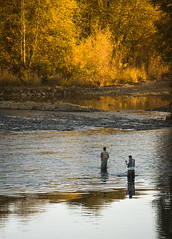 wading... (Lisa Ouellette) Tags: autumn sunset sunlight water reflections river fishing salmon flyfishing ripples spawning waders americanriver explored arbt