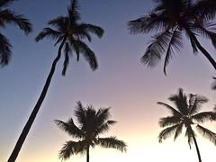 Sunset palms ( island girl ) Tags: ocean beach hawaii pacific bigisland aloha 808 uploaded:by=flickrmobile flickriosapp:filter=nofilter livehawaii