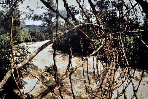 Western New Guinea - Baliem Valley - Rattan Bridge - 2