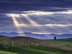 Morning Rays (reddirt791/Bradley Cox) Tags: light clouds dawn washington farm olympus farmland rays omd palouse em1 greenfields m43