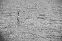 """Il Crocifisso - Lago Varano • <a style=""""font-size:0.8em;"""" href=""""http://www.flickr.com/photos/92529237@N02/11418217675/"""" target=""""_blank"""">View on Flickr</a>"""