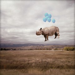 putting the wild back in the west (Janine Graf) Tags: travel silly west 6x6 balloons surreal rhino artrage whiterhinoceros superimpose ontheroadagain somewhereinmontana juxtaposer janine1968 iphone4s janinegraf snapseed moderngrunge